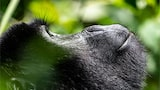 francis bompard sony alpha 9 close up on a baby gorilla