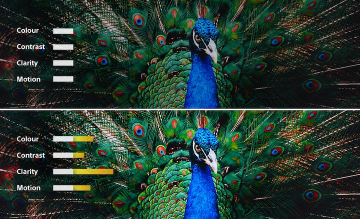 A split screen image of a peacock showing how colour, contrast, clarity and motion are adjusted for a picture in balance