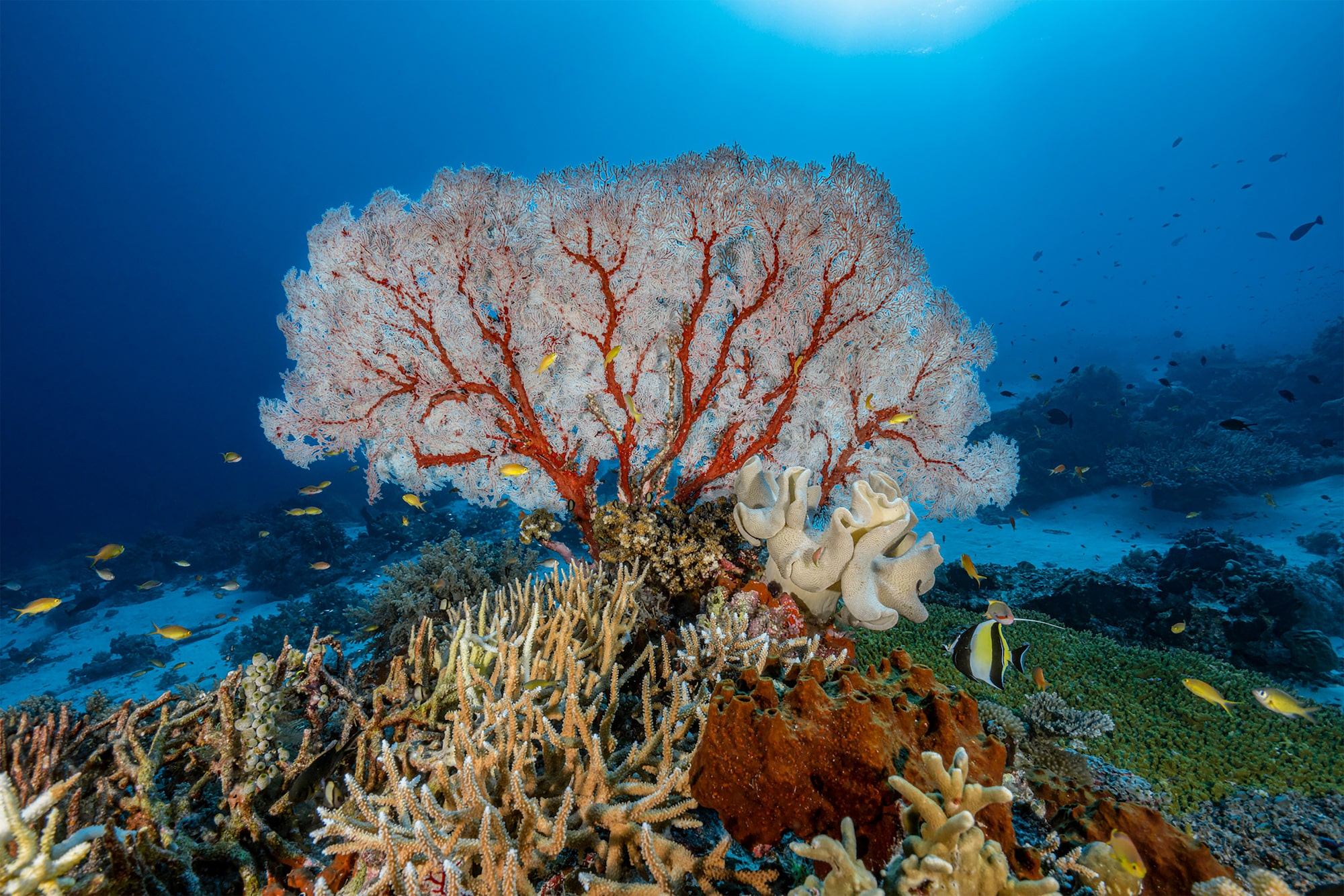 alexis-rosenfeld-sony-A7RM2-a-tree-like-piece-of-coral-illuminated-by-flash-with-a-deep-blue-sea-behind.jpg