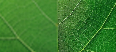 Close-up of leaf showing detail with 4K XR Super Resolution