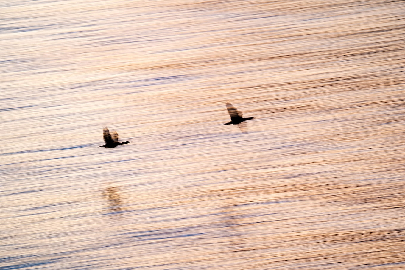 floris smeets sony alpha 9 silhouettes of two birds flying