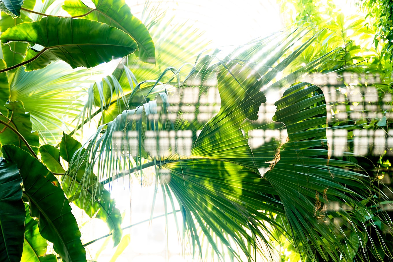 kate-hopewell-smith-sony-alpha-9-reflection-of-bride-and-groom-with-ferns-forming-their-shapes