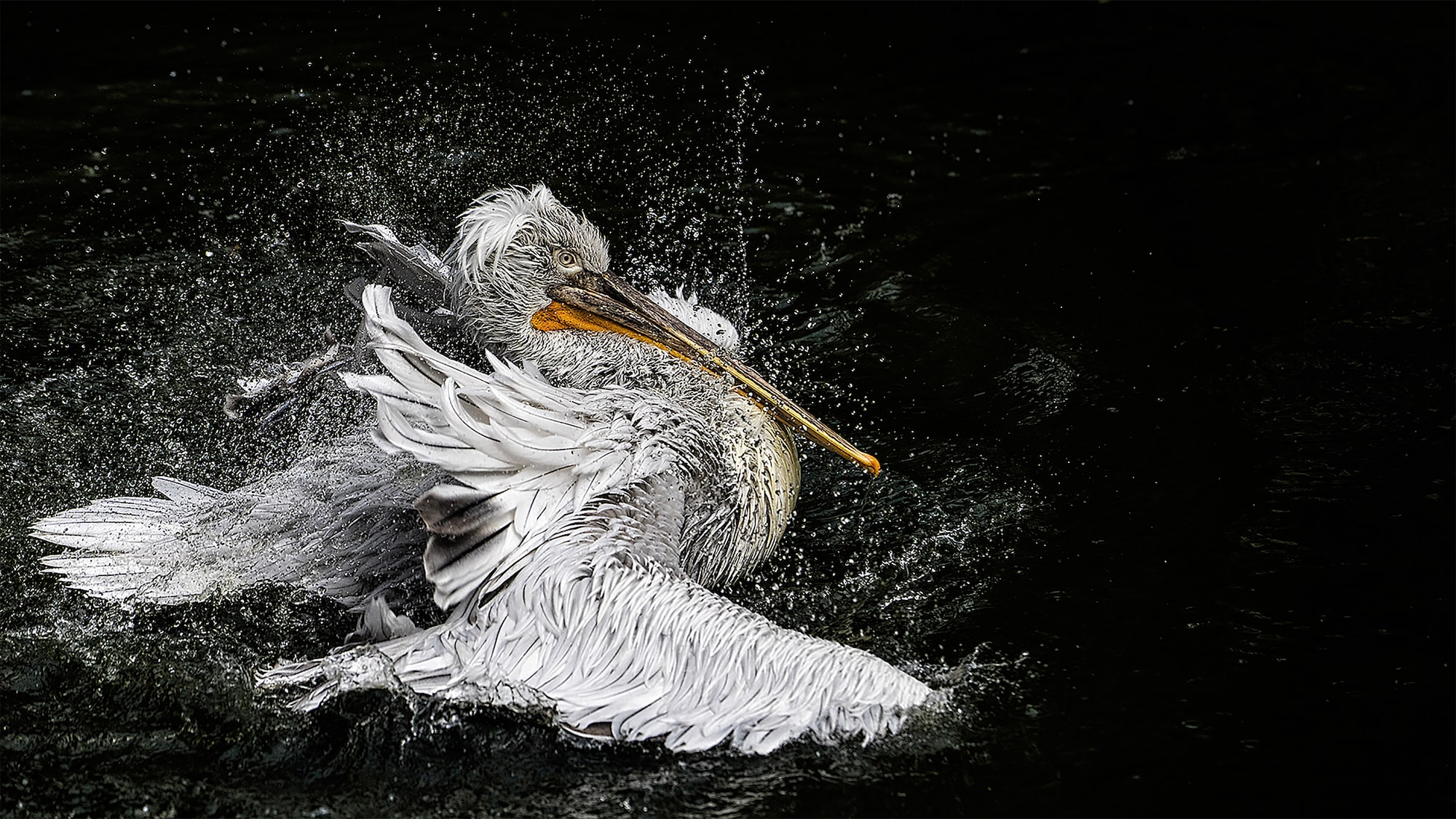 Oliver Schabenberger sony alpha 7II long beaked bird shaking itself in the water