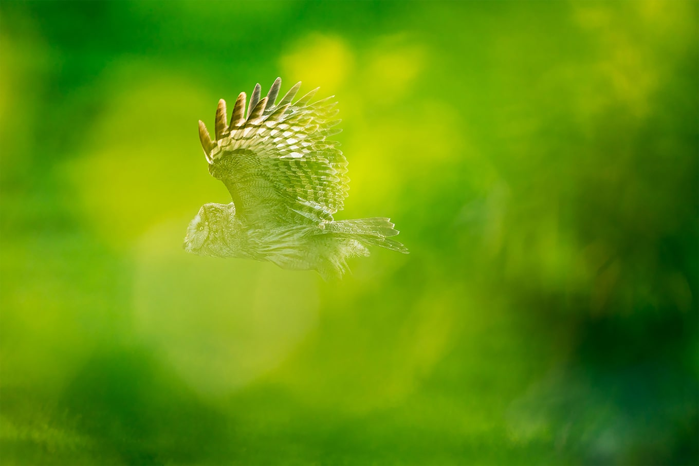 floris smeet sony alpha 9 a raptor flies among greenery