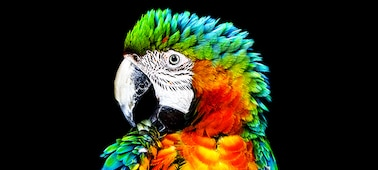 Brightly coloured parrot